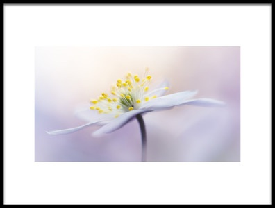 Buy this art print titled Innocence by the artist Bob Daalder photography