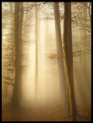 Buy this art print titled Into the Trees by the artist Norbert Maier