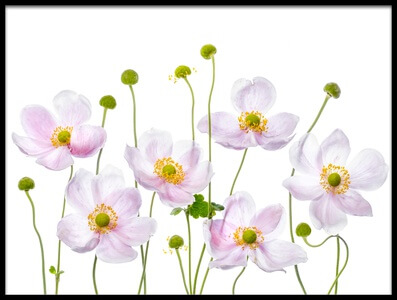 Art print titled Japanese Anemones by the artist Mandy Disher