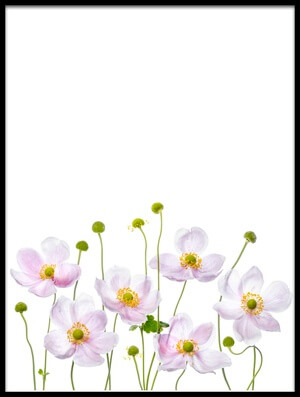 Buy this art print titled Japanese Anemones II by the artist Mandy Disher