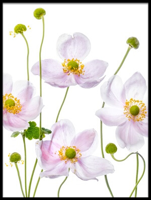 Art print titled Japanese Anemones III by the artist Mandy Disher