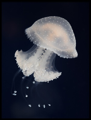 Art print titled Jelly by the artist Sebastian Graf