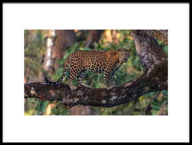 Buy this art print titled Kabini 31 by the artist Kurien Yohannan