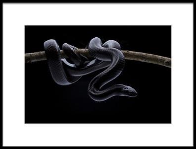 Buy this art print titled King Snake by the artist shikhei goh