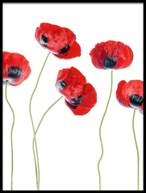 Art print titled Ladybird Poppies III by the artist Mandy Disher