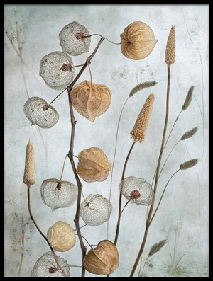 Buy this art print titled Lanterns* by the artist Mandy Disher