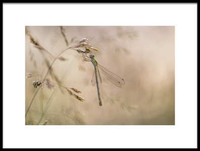 Art print titled Late In the Meadows by the artist Rikard Strand