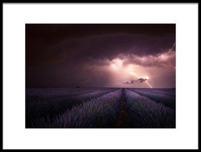 Art print titled Lavender Fragrance by the artist Nicolas Schumacher