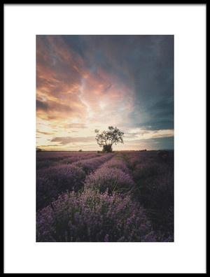 Art print titled Lavender Sunrise by the artist Dmitry Kupratsevich