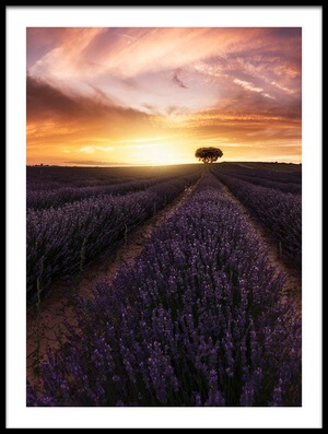 Art print titled Lavender Sunset by the artist Jorge Ruiz Dueso