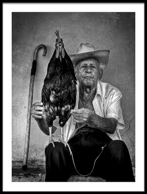 Buy this art print titled Le Vieil Homme Et Le Coq by the artist Alain Mazalrey
