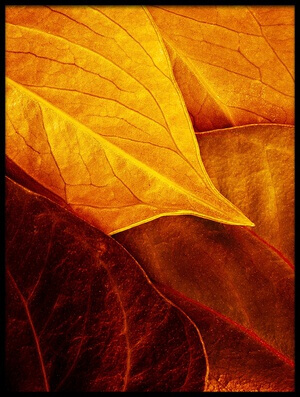 Buy this art print titled Leaves by the artist Luiz Laercio