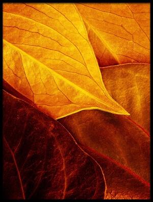 Art print titled Leaves by the artist Luiz Laercio