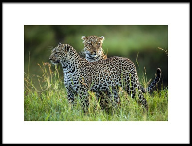 Buy this art print titled Leopard Family by the artist Roshkumar