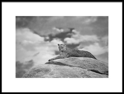 Buy this art print titled Leopard On a Kopje by the artist Mario Moreno