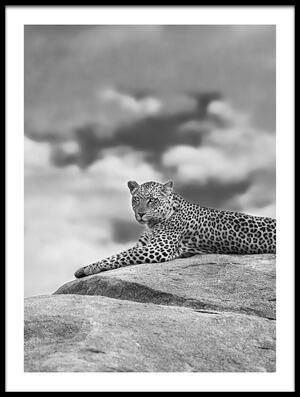 Art print titled Leopard On a Kopje by the artist Mario Moreno