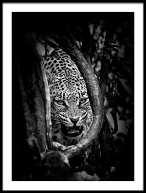 Buy this art print titled Leopard's Lair by the artist John Moulds
