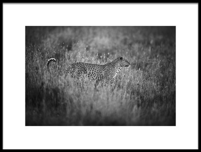 Art print titled Leopards Mood by the artist simona forte