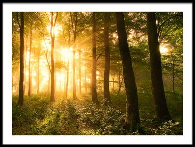 Art print titled Light In the Forest by the artist Leif Løndal