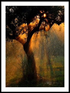 Buy this art print titled Light Shower by the artist Stefano Castoldi