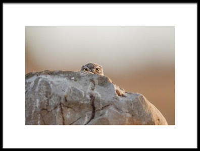 Art print titled Little Owl by the artist Valerio Ferraro