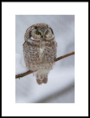 Art print titled Little Owl by the artist igor rossetto