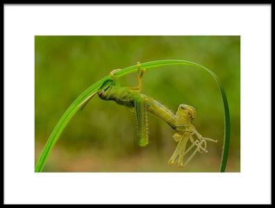 Buy this art print titled Locust Molting by the artist Xióng Lù