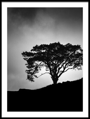 Buy this art print titled Lone Tree by the artist Christian Meermann