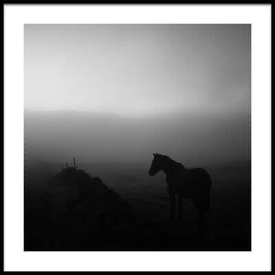 Buy this art print titled Lonely Horse by the artist Rui Caria