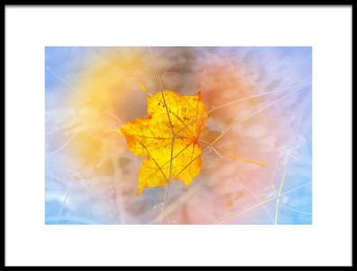Buy this art print titled Lonely In Fall by the artist Ludmila Shumilova