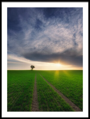 Buy this art print titled Loner In the Sun by the artist Piotr Krol (Bax)