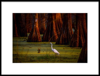 Art print titled Looking for Breakfast by the artist Gregory LeBlanc