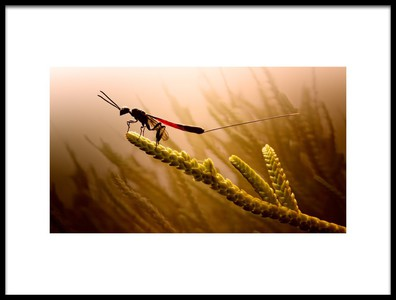 Art print titled Looking for Prey by the artist Jimmy Hoffman