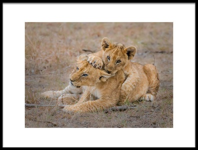 Art print titled Lovely Cubs by the artist Young Feng