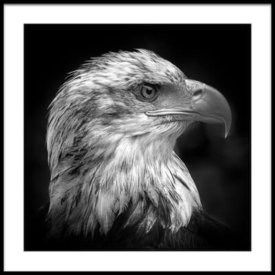 Buy this art print titled Majestic by the artist Peter Pfeiffer