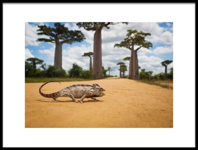 Art print titled Malagasy Chameleon by the artist Waheed AlFazari