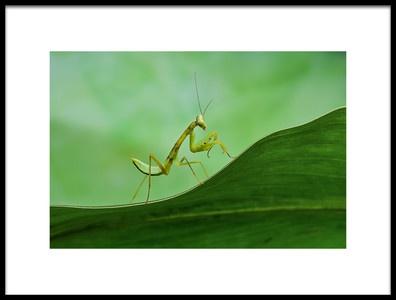 Art print titled Mantis by the artist Xióng Lù