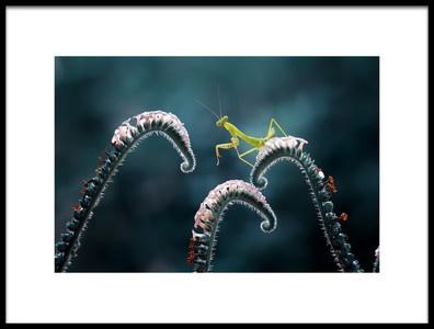 Art print titled Mantish On Tiny by the artist Abdul Gapur Dayak