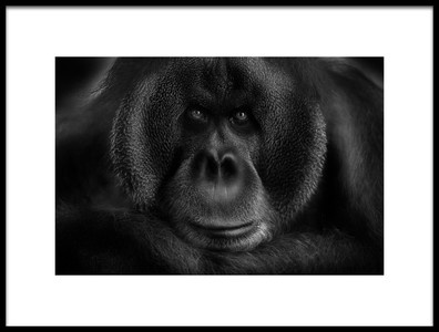 Buy this art print titled Maurice by the artist Kay