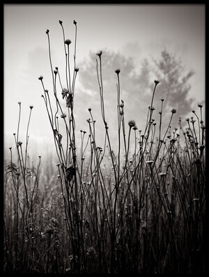 Buy this art print titled Meadow Plants 1 by the artist Louis Wallach