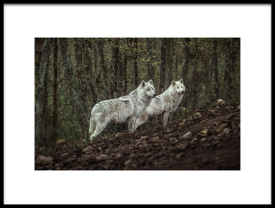 Art print titled Meeting With White Wolves by the artist Ronan Siri