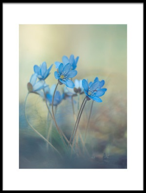 Art print titled Memories of a Spring by the artist Davis Zandersons