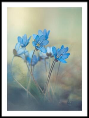 Art print titled Memories of a Spring by the artist Davis Zandersons