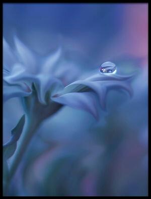 Art print titled Metamorphosis by the artist Juliana Nan