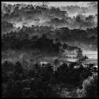 Buy this art print titled Mist In the Morning by the artist Johanes Januar