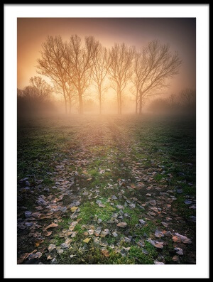 Art print titled Misty Morning by the artist Luca Rebustini