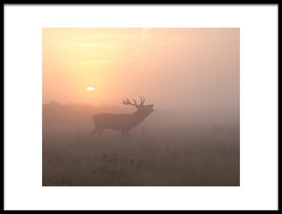 Buy this art print titled Misty Morning Stag by the artist Greg Morgan