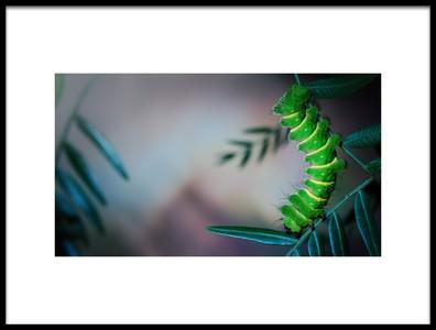 Art print titled Mittrei Larva by the artist Jimmy Hoffman