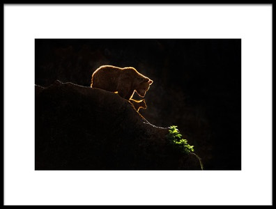 Art print titled Mom Bear With Cub by the artist Xavier Ortega