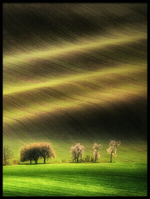 Art print titled Moravian Fields by the artist Piotr Krol (Bax)